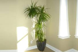 house plants that don t need light 7 beautiful indoor plants that dont need sunlight to survive 7