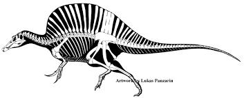 halloween skeleton silhouette squelette de spinosaurus aegyptiacus par lucas panzarin de
