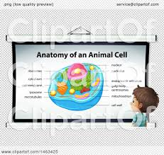 anatomy of an animal images human anatomy learning