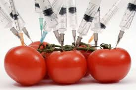 What Is A Gmo And Why Should You Care Small Footprint Family