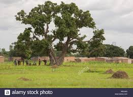 a large tree stands on the outskirts of a in réo