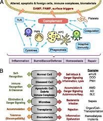 complement in immune and inflammatory disorders