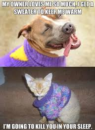 Dog And Cat Memes - dog and cat sweaters animal funnies pinterest funny pictures