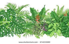 Tropical Plants Images - tropical plant vectors download free vector art stock graphics