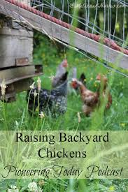 What To Feed Backyard Chickens by Podcast Episode 29 Raising Backyard Chickens Melissa K Norris