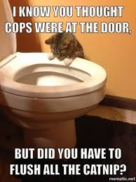 Meme Toilet - a cat staring into a toilet bowl with humorous text above and below