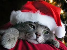 top 10 christmas gift ideas for your cat loving friends wee lil