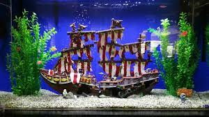 aquarium 256740