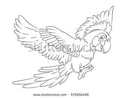 parrot color drawing stock images royalty free images u0026 vectors