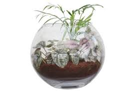 glass terrarium fish bowl tesselaar