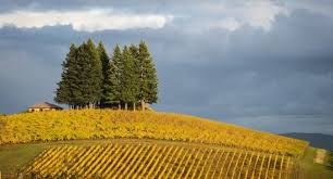 Valley Oregon The Willamette Valley And Wine Country Travel Guide Expert Picks