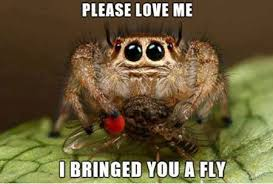 Love Me Meme - this almost makes me want to love spiders almost funny