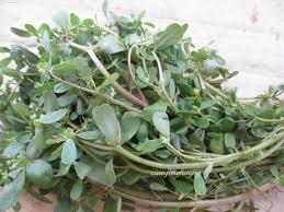 native edible plants malaysia wild vegetables u2013 malaysia vegetarian food