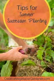 Gardening Tips For Summer - 2505 best growing things images on pinterest gardening flower