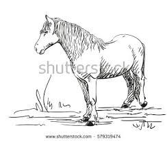 sketch horse hand drawn vector illustration stock vector 579318484