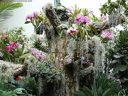 Botanical Garden Orchid Show 844c2919b822cef7a4275ae31ee79e92 Orchid Show Peru Jpg 736 554