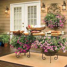 121 container gardening ideas petunias glass top dining table