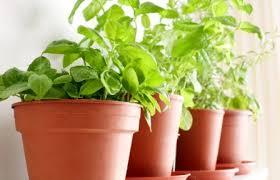 herbs indoors 10 important tips to create your own indoor herb garden