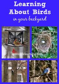 Birds In Your Backyard Bird Study Learning About Birds Of North America Creekside