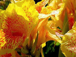 the 15 most beautiful flowers in the world trawel india mails