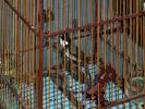 ตลาดร่ำรวย™] คลิปนกหัวจุก สำเนียงเพชรบุรี แก่ง