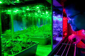 Greenhouse Lights Using Leds To Manipulate Plant Growth Characteristics Hort