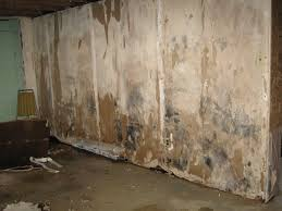 cleaning mold from basement walls home design furniture decorating