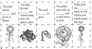 adapting plant life cycle worksheet for students who are blind or