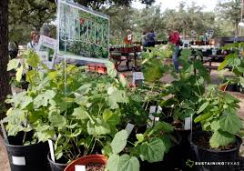 native plant society npsot u0027s 2015 arlington native plant fall sale pictures