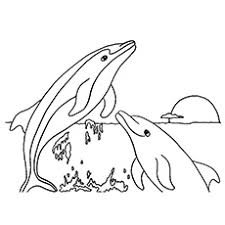 printable dolphin images top 20 free printable dolphin coloring pages online