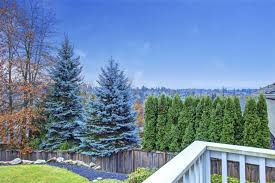 Best Trees For Backyard by 32 Brilliant Backyard Tree Ideas Home Stratosphere