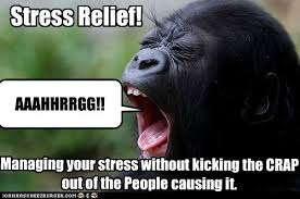 Stressed Out Memes - stress relief animal capshunz funny animals animal captions