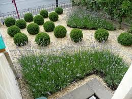 85 best contemporary lavender garden images on pinterest