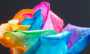 Blue Roses For Sale Rainbow Roses Resource The 1 Source For Rainbow Roses And