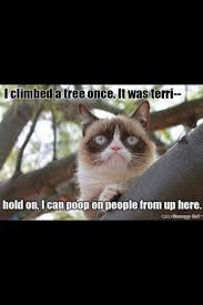 Grumpy Cat Meme I Had Fun Once - the grumpiest grumpy cat memes to sadden your day snappy pixels