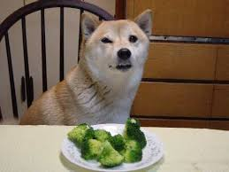 Meme Encyclopedia - broccoli dog encyclopedia dramatica