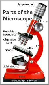 Parts Of A Compound Light Microscope Parts Of A Microscope Eyepiece Stage Clips Light Source