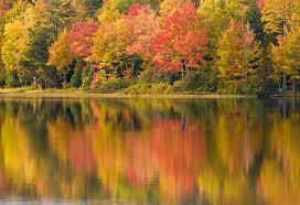 michigan fall color fall foliage color fall color michigan