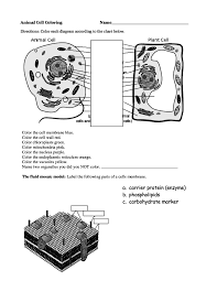 100 a typical plant cell worksheet plant and animal cells