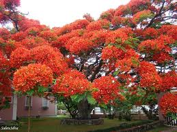 here are 16 of the most beautiful trees in the world wow