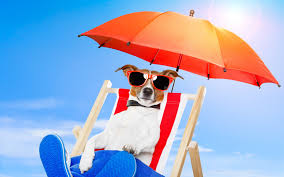 Lounge Chair Umbrella Cool Dog With Sunglasses Relaxing On Lounge Chair Under Umbrella