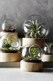 anthropologie s new arrivals home decor terraria anthropologie s new arrivals home decor