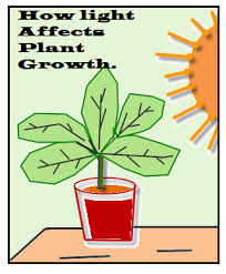 light and plant growth how to identify independent and dependent variables