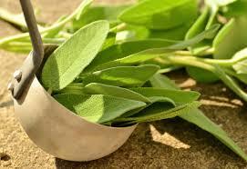 herbe cuisine images gratuites herbe feuille fleur arôme aliments vert