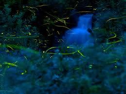 magical night wallpapers fireflies