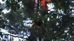 skydiver rescued after spending hours stuck in tree wnct