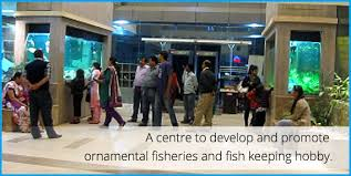 ornamental fisheries and research institute oftri