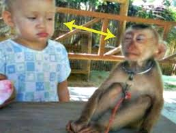 Baby Monkey Meme - 8 baby monkey memes to make you awww