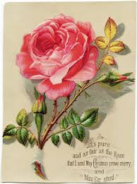 victorian christmas rose card free download design shop blog