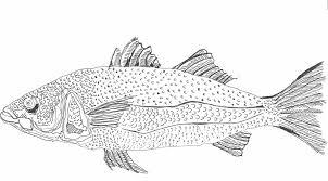 my fish drawings holly bobbin blog